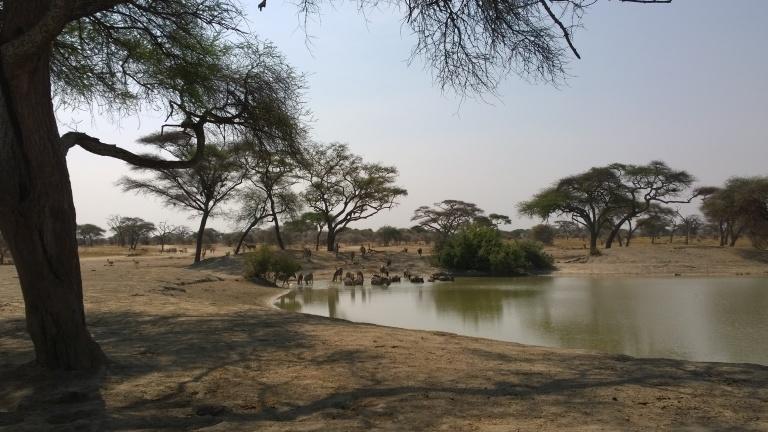 Tarangire National Park (2).jpg