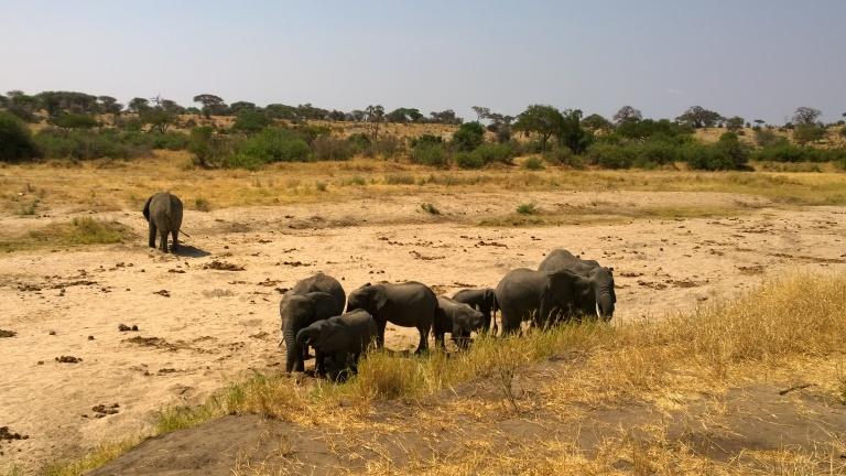 Tarangire National Park (7).jpg