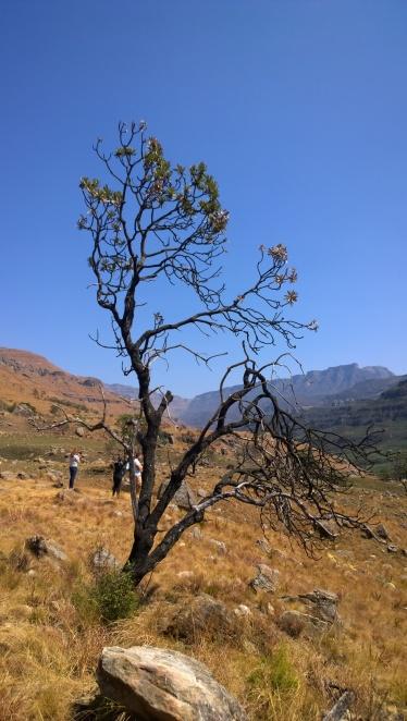 Sani Pass a Lesotho (25)
