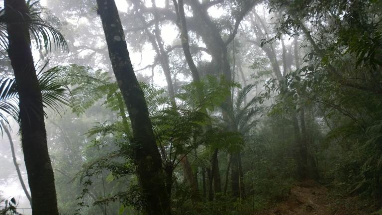 Parque National Serra dos Orgaos - Trilha da Pedra do Sino (46).jpg