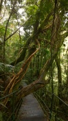 Parque National Serra dos Orgaos - Trilha Suspensa (5)
